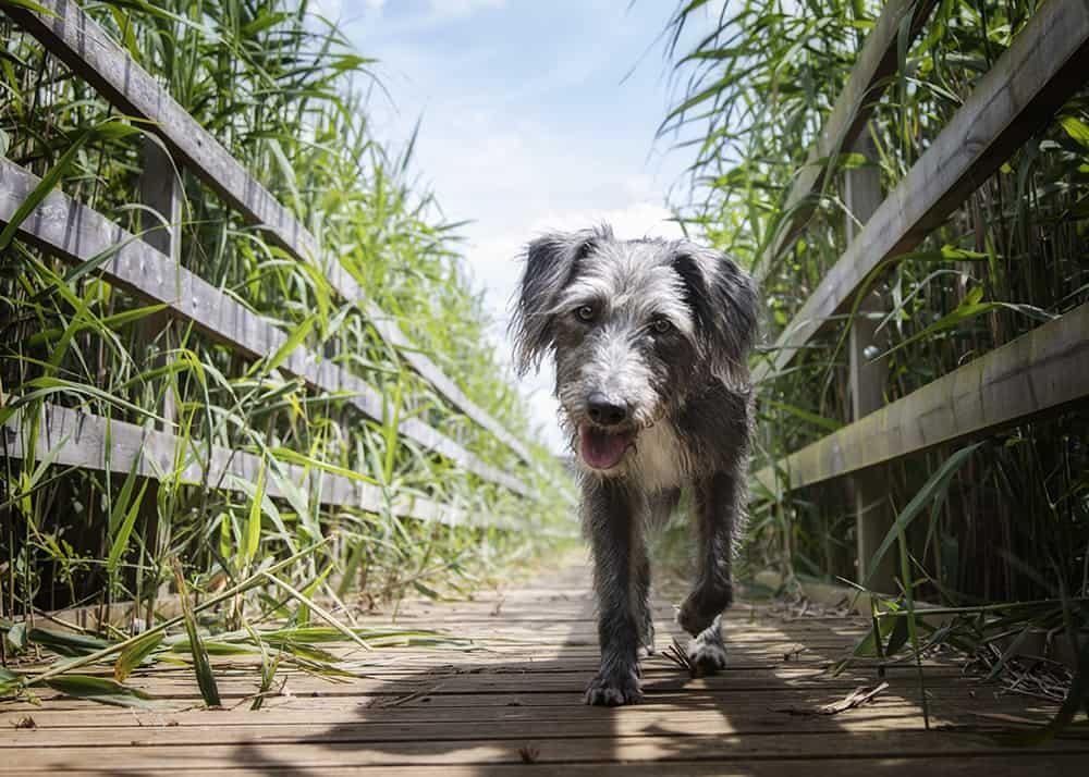 Pet page Dog on path
